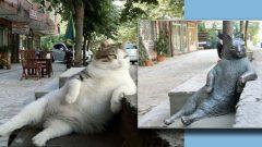 Kadıköy'de kedi heykeli açılışı