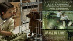 Pera Film'de Sinemanın Köpekleri gösteriliyor