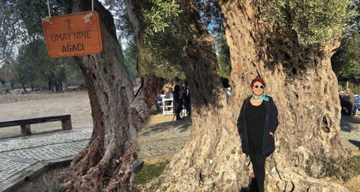 Romandaki Umay Nine zeytin ağacına isim  oldu