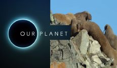 Our Planet muhteşem bir umut belgeseli